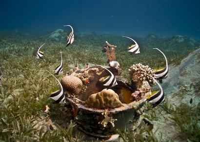 Taucheindrücke vor der Küste von Malaysia